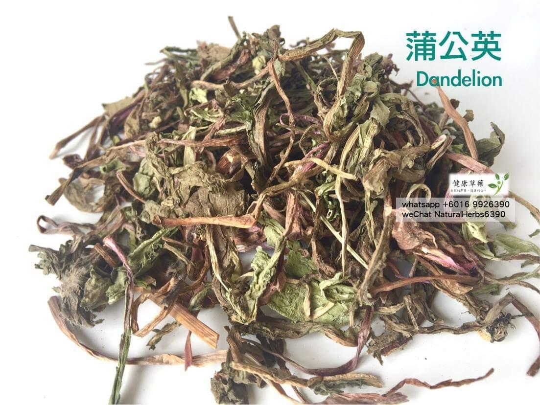 【通乳腺 x 發奶】蒲公英 Dandelion