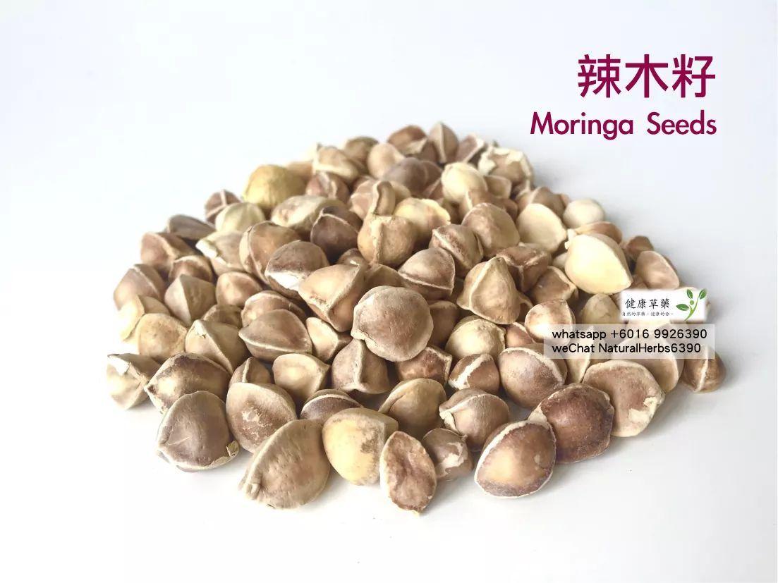 【心臟健康】辣木籽 Moringa Seeds