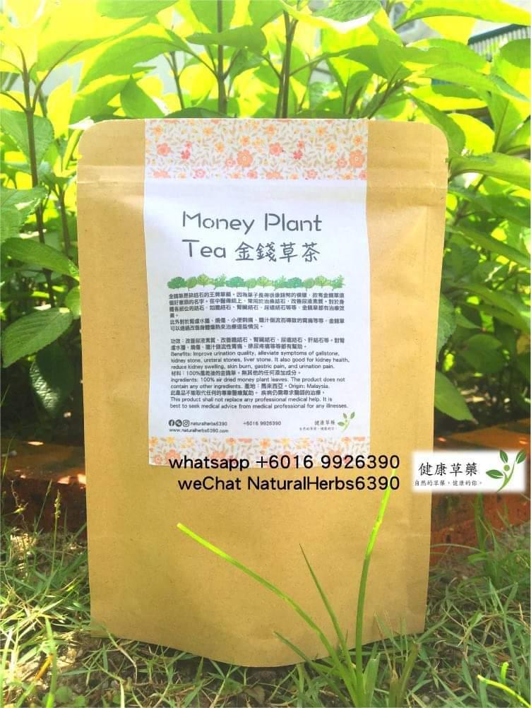 金錢草茶 Money Plant Tea