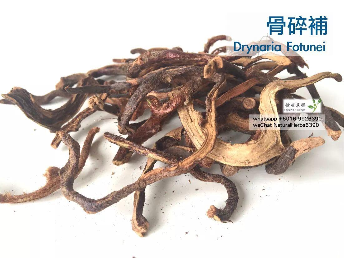 【強身健骨】骨碎補 Drynaria Fotunei