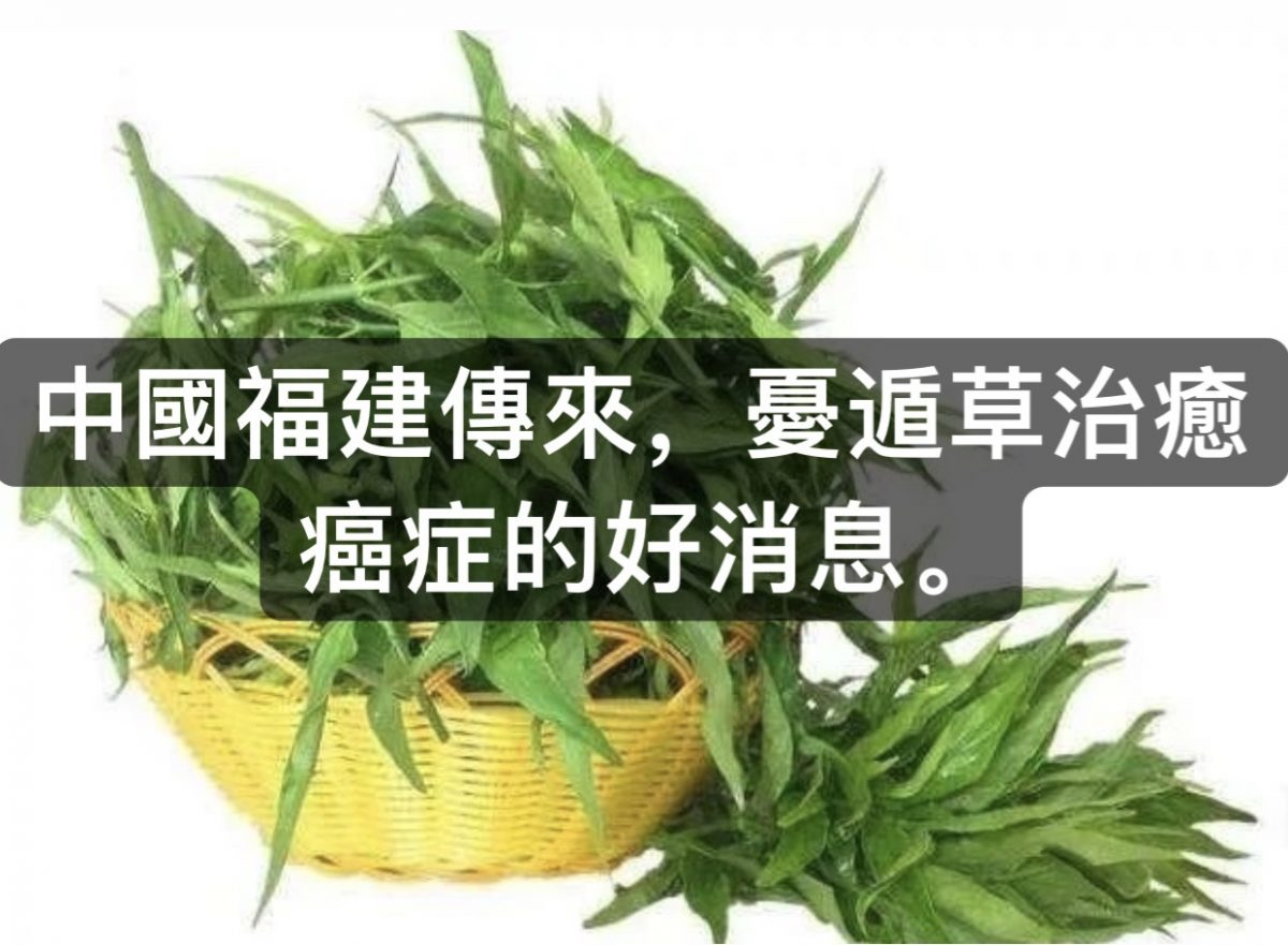 中國福建傳來,憂遁草治癒癌症的好消息